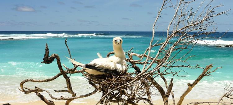 birdwatching, birding tours australia, cocos keeling islands
